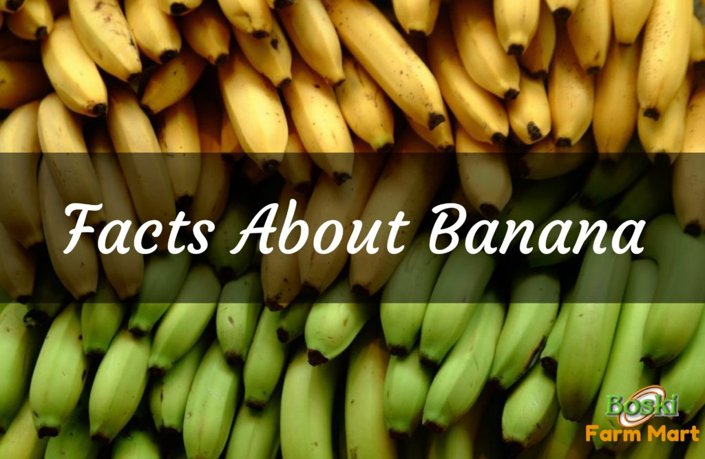 Banana health benefits nutritional facts recommendations